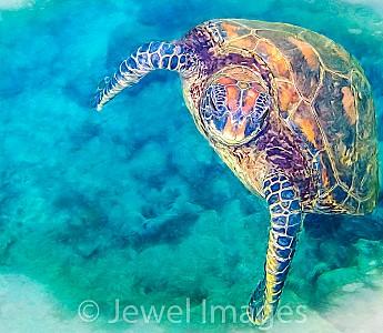 Hawaiian Wildlife Gallery