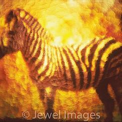011 Zebra Through the Looking Glass Botswana