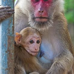 018 Monkey Love Thailand