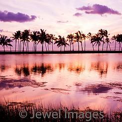 021 Palm Trees at Anaeho'omalu Bay I L003