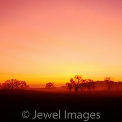 021 Sunrise with Oak Trees CA