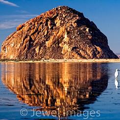023 Egret in Morro Bay CA