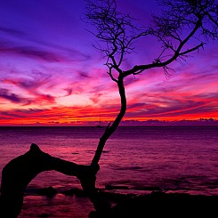 024 Sunset Silhouette L005