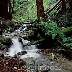 027 Quiet Whisper Llimekiln State Park CA