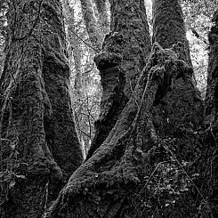 028 Tree Trunks Border Range NP Australia