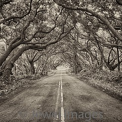 031 Lonely Road L088