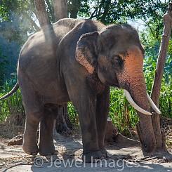 032 Elephant Dusting Thailand
