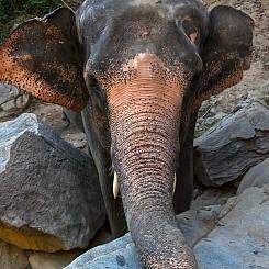 033 Elephant Investigation Thailand