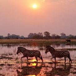 049 Zebra Sunset Botswana