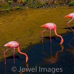 051 Flamingo 0638