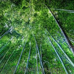 054 Bamboo Whisper L053