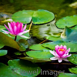 058 Water Lily Series I (painted) V002