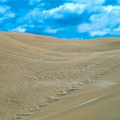 064 Basic Elements Nipomo Dunes CA