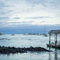 064 Puerto Ayora Santa Cruz Island 0813