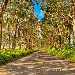 076 Tree Tunnel Road L027