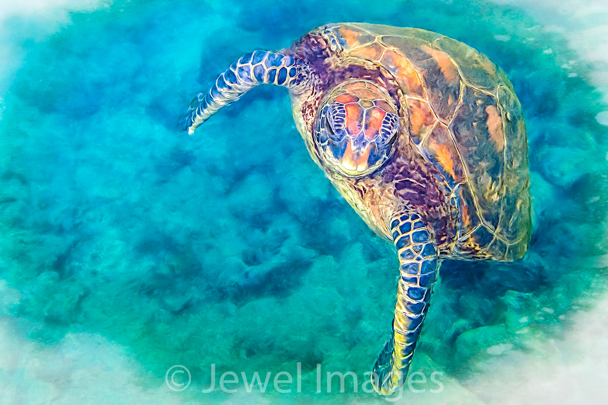 Curious Green Sea Turtle